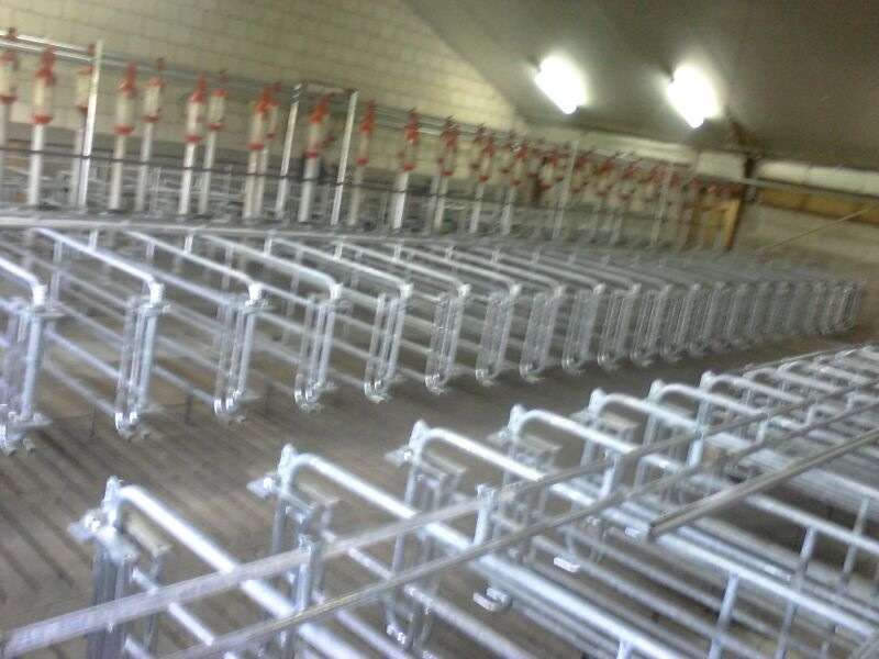 Gestation / farrowing housing Spanjers